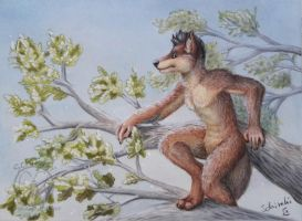 a wolf in the trees by Schiraki