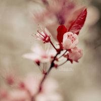 Brighten Spring II by MadSubstance