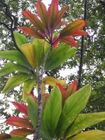 Red and Green Leaves 1 by wafreeSTOCK