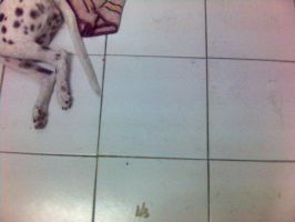 dirty floor by paujas