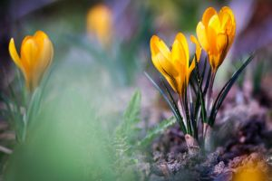 Colourful Spring by CedaCo