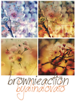 """Brownie Action """"66th Action"""" by alinalovato"""