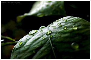 Waterdrops on Leaf by hauerli