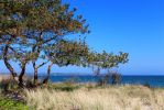 Spring on Baltic by legate01