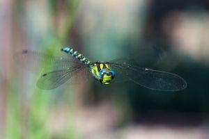 Flight of the Dragonfly 2 by LordGuardian