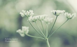 delicate by PiecesOfAnsley