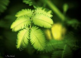 Tender green. by Phototubby