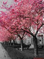 Pink Trees by PaSt1978