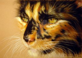 Commissioned portrait of Tortoiseshell Cat by petpaintings
