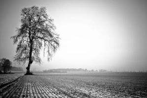 Winter landscape 3 by darkphotographe