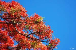 Pink tree by wolmers