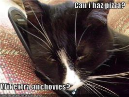 my cat wants pizza by kungfudemoness