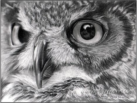 Owl Portrait by deviant-art-guy