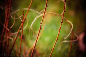 Thorns by BaiMilPhotography