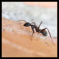 Ant by Globaludodesign