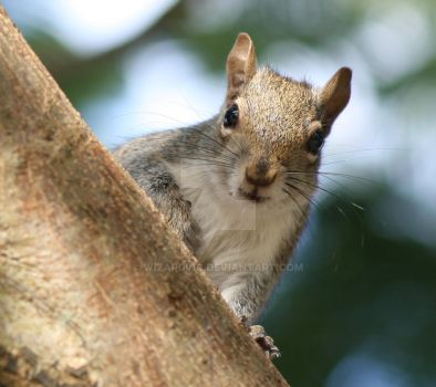 Curious Squirrel by Wizardinc