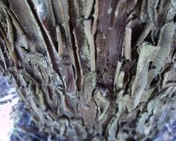Bark - Stock photo by cestnms