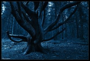 Devil's Tree by FlorentCourty