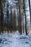 Snowy Woodland 11 by joannastar-stock