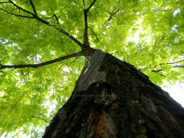 Glance up the tree. by SaralovesMichael