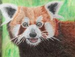 Red panda by Radioactive-Ink