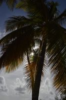 Sun has fault the foliage of a coconut palm by A1Z2E3R