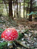 forest and one toadstool by czmartin