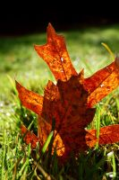 Goodbye Sweet Leaves by MaryAnnBubna