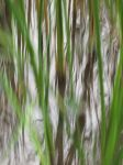 Water And Grass 3 by FiLH