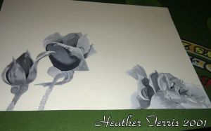 Black and White Roses by Heather-Ferris