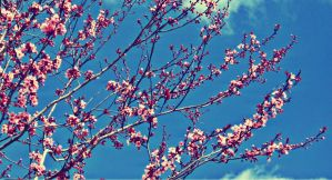 Spring is Coming by nzih