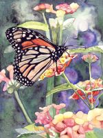 Butterfly Series 1 by bettyswatercolor