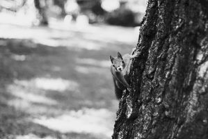 Curious Squirrel by kailay