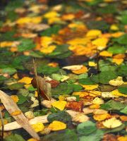 Autumn leaves on water by Maresolo