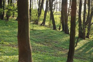 Forest Stock Image 1 by kalinaicons-stock