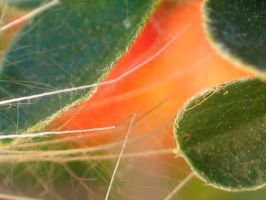 PLANT ABSTRACT by Sandy33311