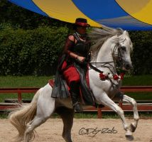 Andalusian Stallion - 24 by ElaineSeleneStock
