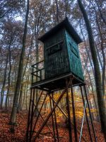 Deep in the Forest No1 HDR by Risen-From-The-Ruins