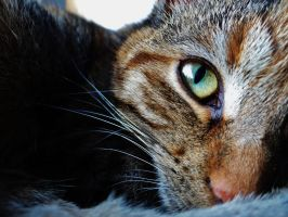 Eye of the Tiger... by TiSo94