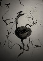 Black Rose by bondangail