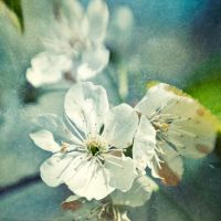 blossom by art-photo-kunst