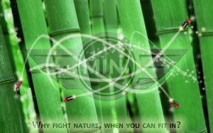 Bamboo and lights by Sandra-honestly