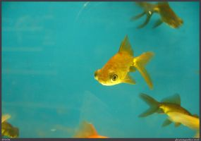 Fish Stock 0044 by phantompanther-stock