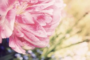 Flower by Sunhillow
