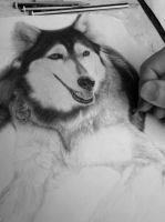 In progress.. Dog (Drawing) [photo 1] by DesignerMF