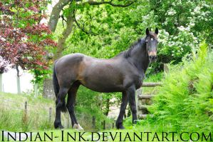 Seal Brown Friesian Mix 1 by Indian-Ink