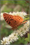 Portrait of a Butterfly by VictoriaLPF