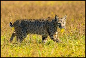 Here Kitty Kitty by AirshowDave