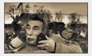 Pigeon's lover still alive by Yousry-Aref