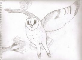 Barn Owl by veronicle